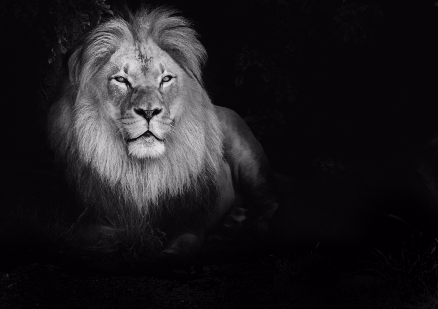 Alpha Within Leo Inspirations